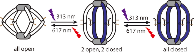 Schematic representation of successive photoswitching in photochromic DTE-based coordination cages.