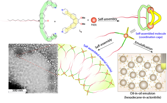 Schematic representation of the assembly of an amphiphilic coordination cage-based emulsifier and cryo-TEM images of hollow spherical vesicles formed in acetonitril.
